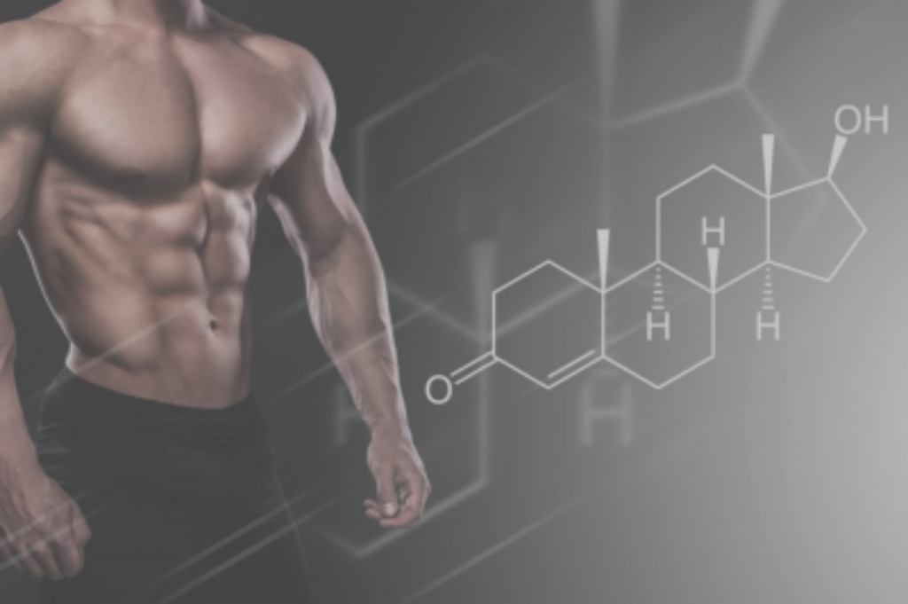 testosterone oestrogene