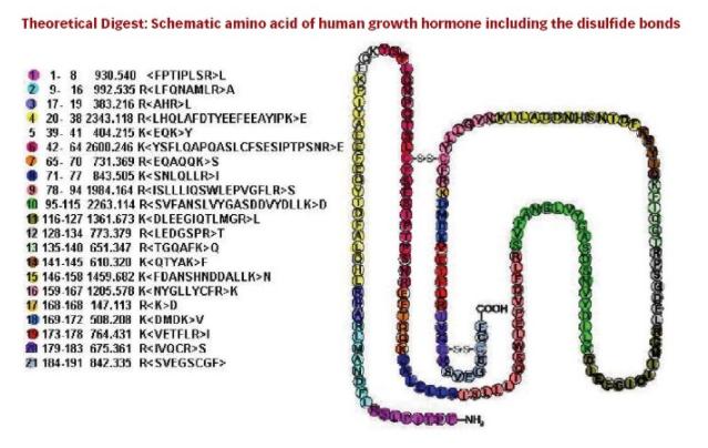 hormone de croissance hgh