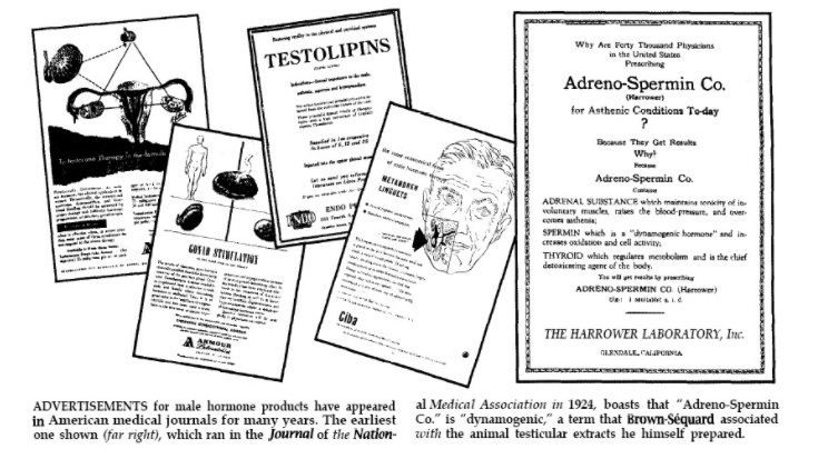 testosterone synthetique histoire