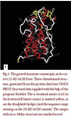 hormone de croissance humaine hch