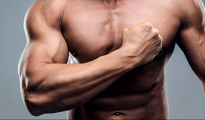 muscle testosterone hcg regime